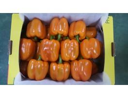 주황파프리카(특/5kg/1박스)